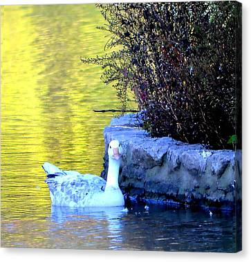 Canvas Print featuring the photograph Lucy by Deena Stoddard
