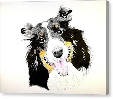 Shetland Sheepdog Canvas Print - Lucy's Portrait by Richard Burrows