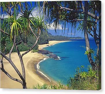 Lumahai Beach Canvas Print