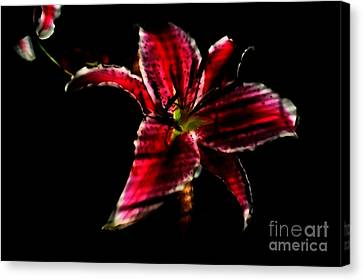 Canvas Print featuring the photograph Luminet Darkness by Jessica Shelton