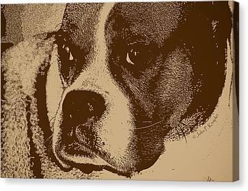 Luna The Boxer  Canvas Print by John Knapko