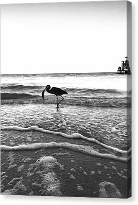 Canvas Print featuring the photograph Lunch At The Pier by Jean Marie Maggi