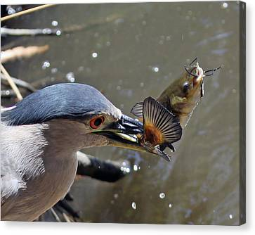 Lunch Is Served Canvas Print by Shoal Hollingsworth