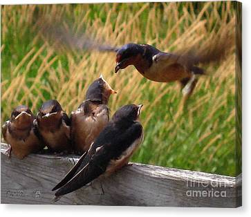 Lunch Is Served To The Fourth Baby Barn Swallow Canvas Print by J McCombie