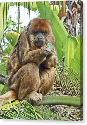 Lunch Time - Santa Ana Zoo Canvas Print by Cheryl Del Toro