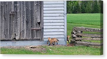 Fox Kit Canvas Print - Lunch Time by Bill Morgenstern