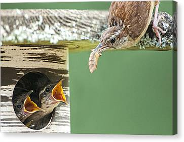 Lunchtime At The Wren Household Canvas Print