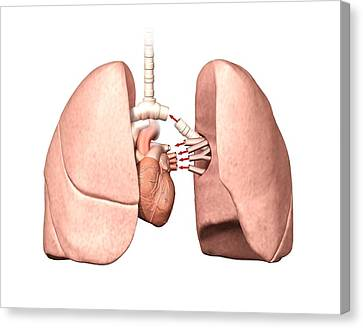 Lung Operation Canvas Print by Henning Dalhoff