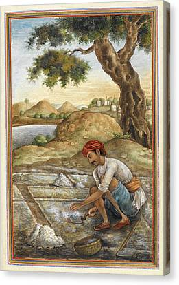Sociology Canvas Print - Lunia Salt-digger by British Library