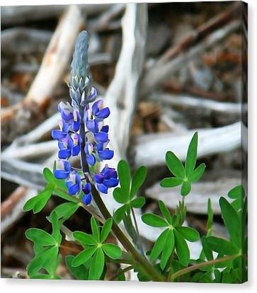 Lupin And Driftwood Canvas Print by Art Block Collections