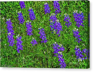 Lupine At Lake Whitney Texas Canvas Print by Bob and Nadine Johnston