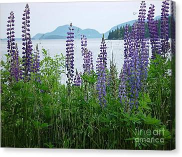 Canvas Print featuring the photograph Lupine At Sorrento by Christopher Mace