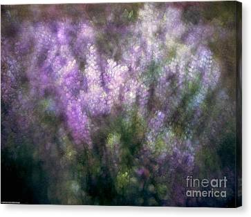 Lupine By The River  Canvas Print by Kevin Felts