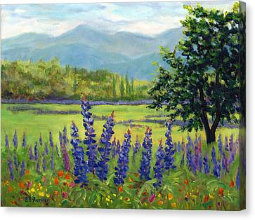 Lupine Field, Sugar Hill, Nh Canvas Print by Elaine Farmer