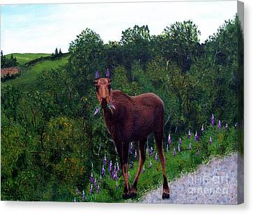 Lupine Loving Moose Canvas Print by Barbara Griffin