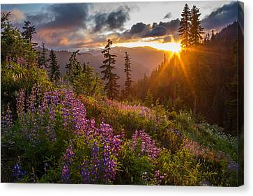 North Cascades Canvas Print - Lupine Meadows Sunstar by Mike Reid