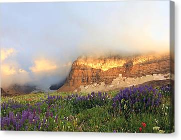Lupine Wildflowers On Mount Timpanogos Canvas Print by Johnny Adolphson