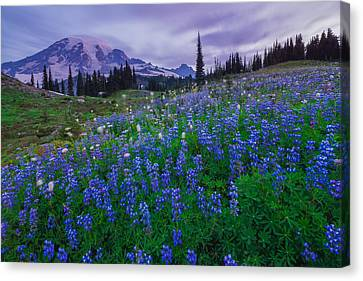 Lupines Dawn Canvas Print by Gene Garnace
