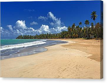 Luquillo Beach Canvas Print by George Oze