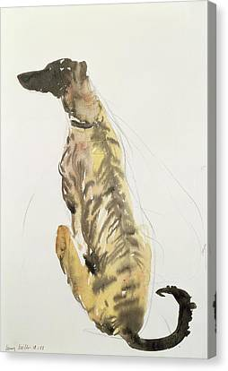 Lurcher Sitting Canvas Print by Lucy Willis