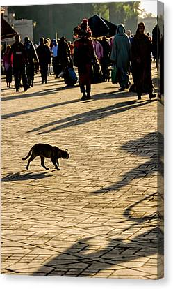 Lurking Cat In The Jemaa El Fna Square Marakesh Canvas Print by David Smith