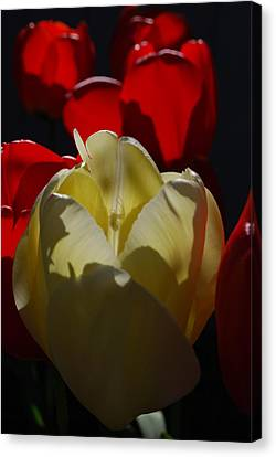 Canvas Print featuring the photograph Lurking Shadow by Jani Freimann