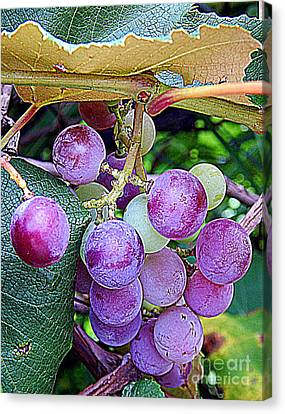Concord Grapes Canvas Print - Luscious Grapes In New Orleans Louisiana by Michael Hoard