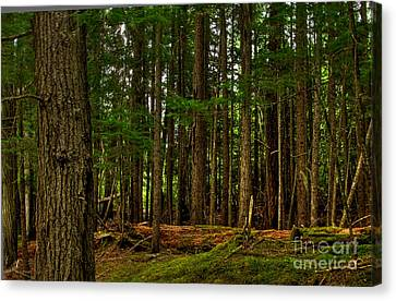 Canvas Print featuring the photograph Lush Green Forest by Sam Rosen