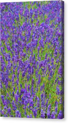 Lush Lavendula Canvas Print by Tim Gainey