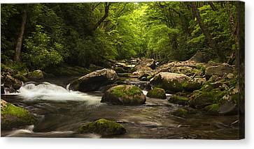 Lush Woods At Spring Canvas Print by Andrew Soundarajan