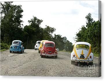 Luve Bugs  Canvas Print by Gary Bridger