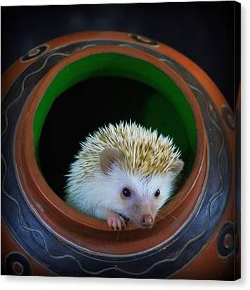 Lyla The Hedgehog Canvas Print by Paul  Wilford