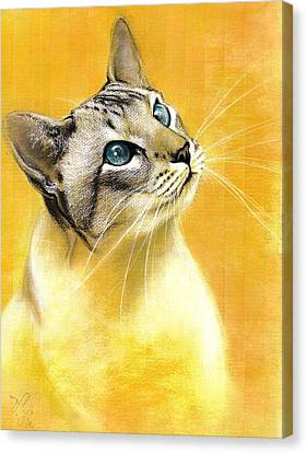 Canvas Print featuring the drawing Lynx Point Siamese by VLee Watson