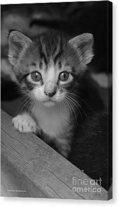 M Kitten Canvas Print by Tannis  Baldwin