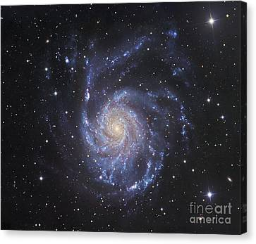 M101, The Pinwheel Galaxy In Ursa Major Canvas Print by Robert Gendler