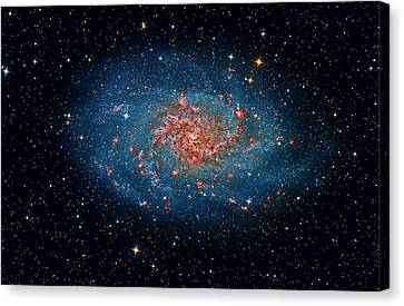 M33 Spiral Galaxy Canvas Print by Celestial Images