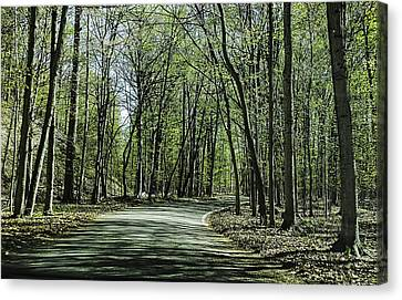 M119 Tunnel Of Trees Michigan Canvas Print by LeeAnn McLaneGoetz McLaneGoetzStudioLLCcom