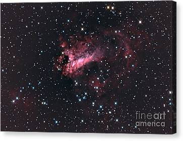M17 The Swan Nebula Complex Canvas Print by John Chumack
