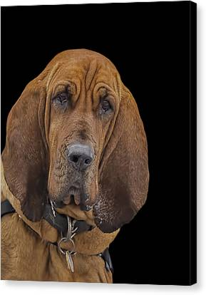 Mabel Canvas Print by Penny Pesaturo
