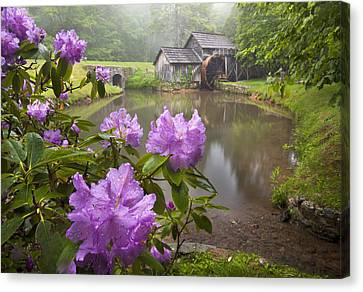 Mabry Rhododendron Canvas Print by Brent McGuirt