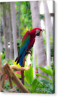 Canvas Print featuring the photograph Macaw by Angela DeFrias