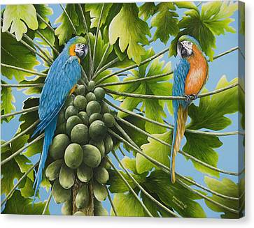 Macaw Parrots In Papaya Tree Canvas Print