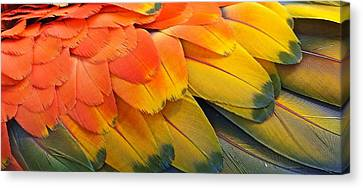 Macaw Yellow Canvas Print by Colleen Renshaw