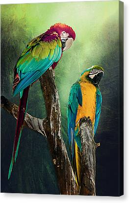 Macaws Siesta Time Canvas Print by Brian Tarr