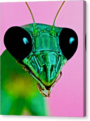 Macro Closeup Of The Praying Mantis Canvas Print by Leslie Crotty