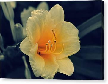 Macro Flower Canvas Print
