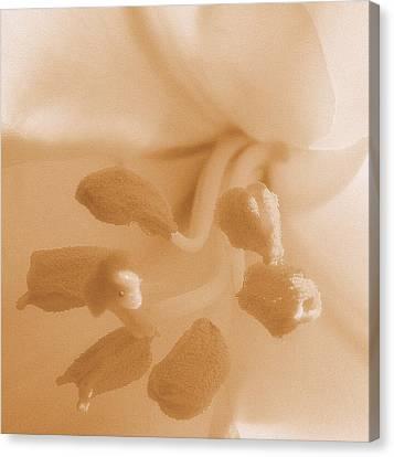 Macro Of White Flower Detail High Key Sepia Tone Canvas Print