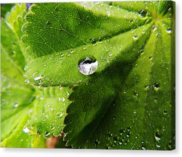 Canvas Print featuring the photograph Macro Raindrop On Leaf by Karen Horn