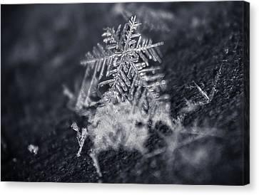 Macro Snowflake Canvas Print