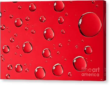Macro Water Drop On Red Canvas Print by Sharon Dominick